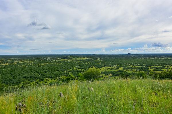 Grandiose Aussicht über die Savuti Plains