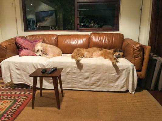 Die Sofas sind für Hunde da ;)