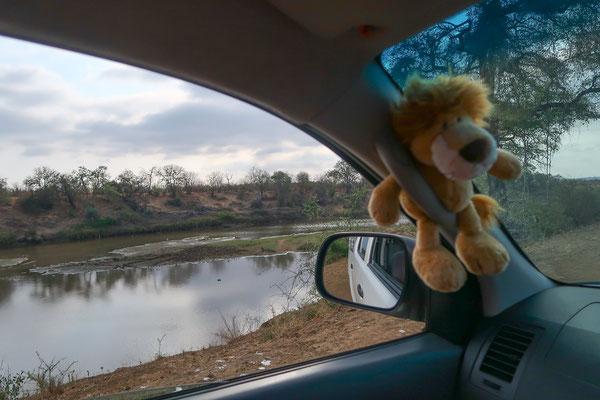 Löwi fährt jetzt vorne im Auto mit