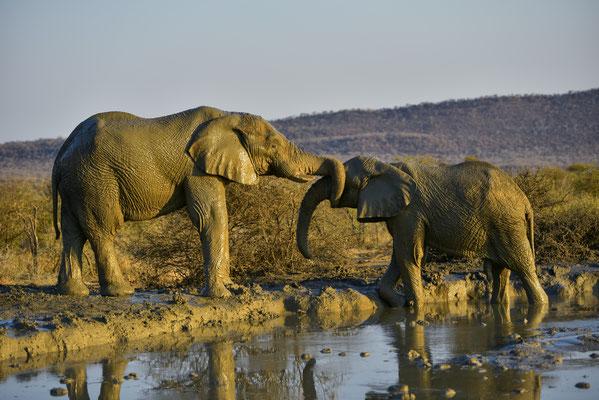 Elefanten-Liebe