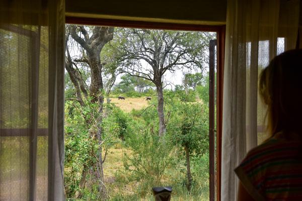 Rhino-Aussicht aus dem Zimmer