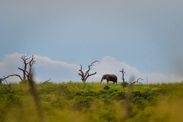 Vereinzelt Elefanten am Horizont