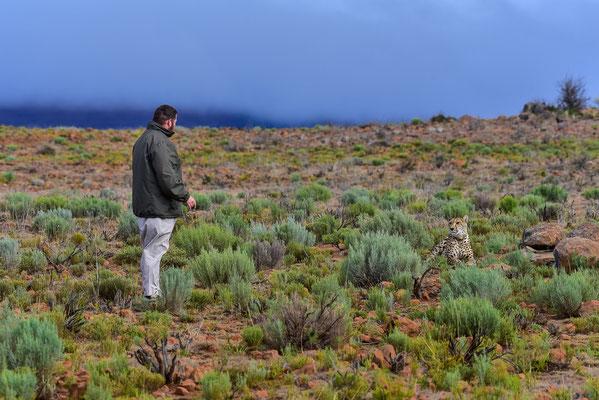 Dave unser Guide schaut, wie es um die Laune bei der Gepardin steht