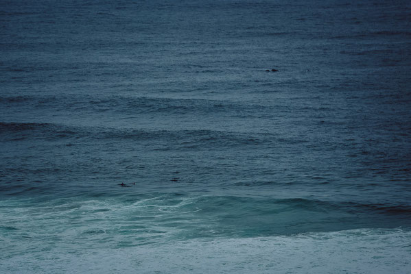 Wale und Delphine gleichzeitig in der Ferne