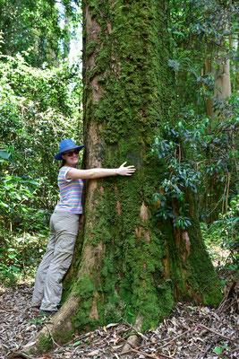 Woodbush Forest