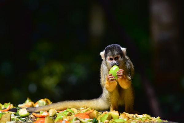 Futterzeit im Monkeyland