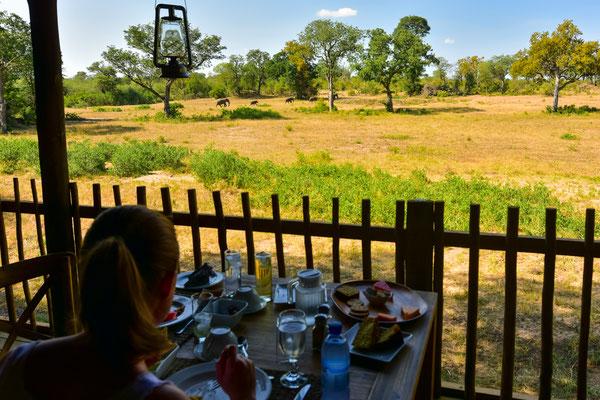 Essen mit Aussicht - Elefantenfamilie zu Besuch beim Wasserloch
