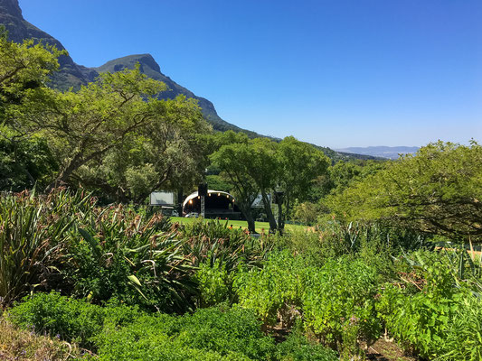 Im Kirstenbosch Botanical Garden
