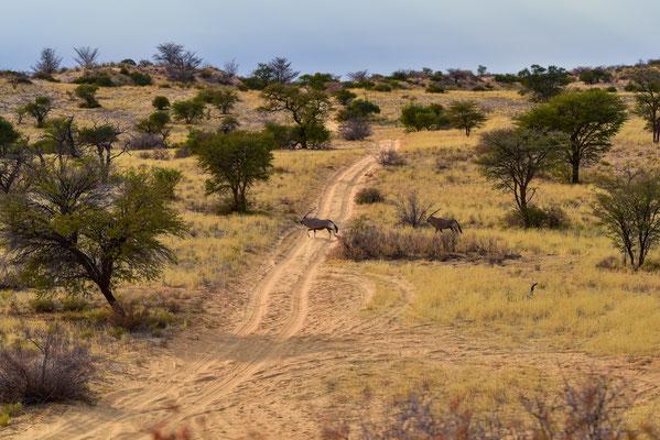 Weg nach Mabuasehube
