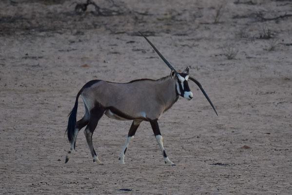 Oryx-Einhorn