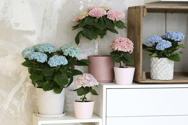 ©Magical Colours Your Home, les variétés