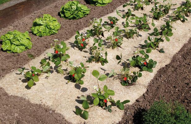 ©Nortene - Chanvrelin en 750 g de 1,35 x 3 m pour les fraisiers