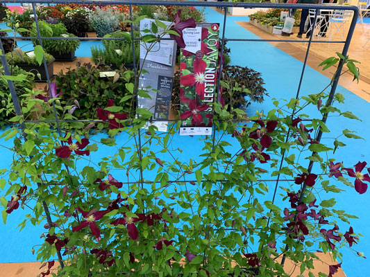 ©Archi'Tendances - Salon du végétal 2019 - Stand Javoy Plantes - Clématite Burning Love