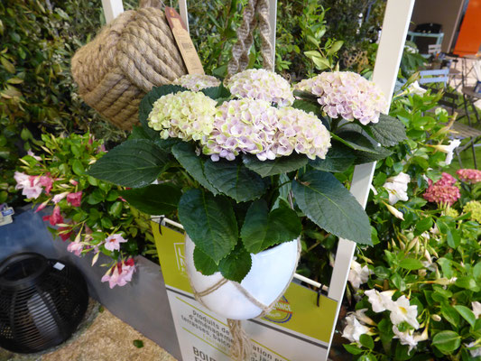 Foire de Paris 2018, Magical Colours Your Home, hortensia d'intérieur