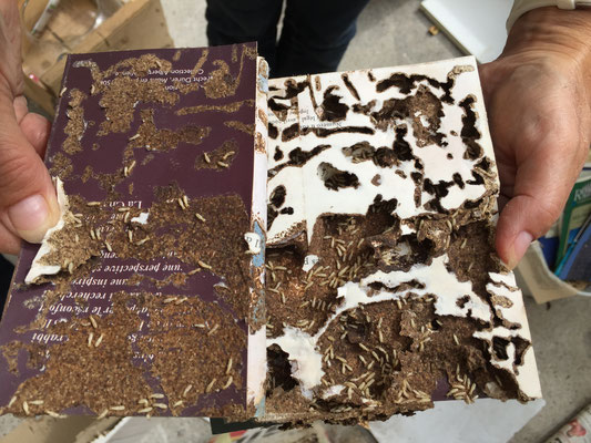 ©Sentri tech, dégâts causés par les termites dans un livre