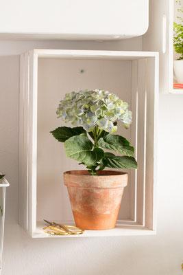 ©Magical Colours Your Home, 150 jours de floraison.