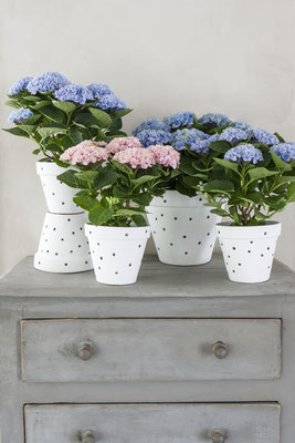 ©MagicalColoursYourHome_hortensias-buffet-decoration