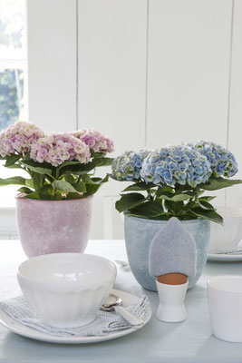 ©MagicalColoursYourHome_hortensias-dejeune-table-brunch