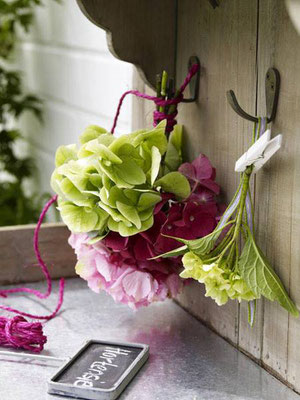 Magical Hydrangea, fleurs coupées