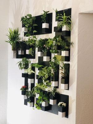 ©Capill'O Concepts, mur végétal de Capill'O Cube noir