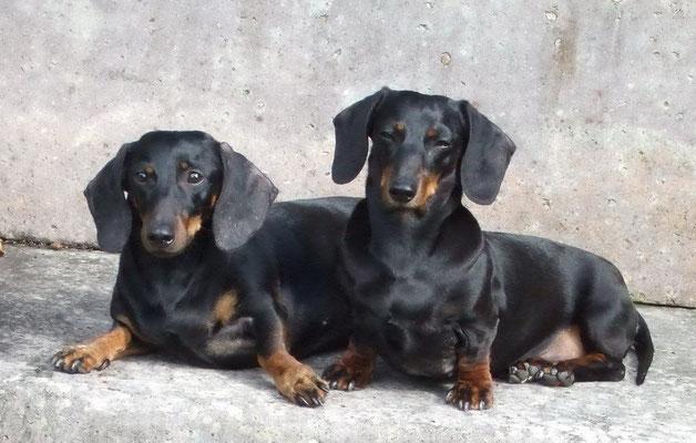 Layla und Sinnie