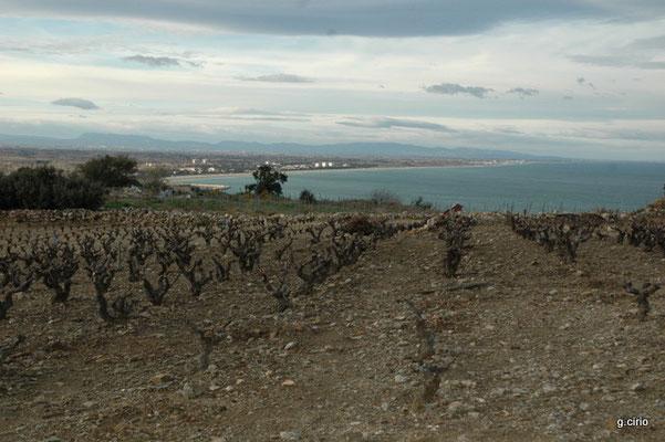 les vignes et la baie d'Argelès