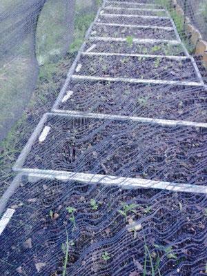 秋植え野菜とハーブ