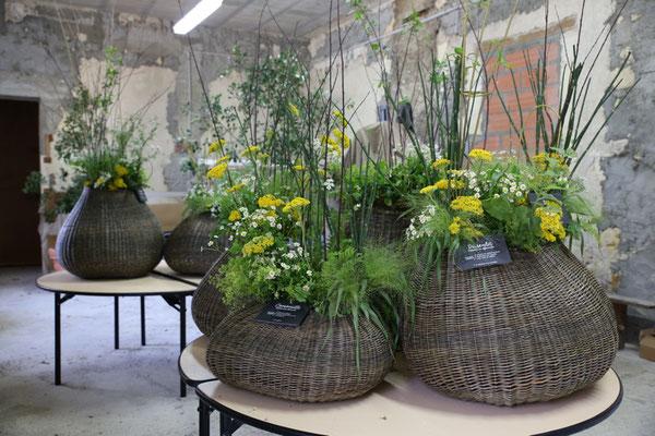 Bulbes présentation florale ( Arrangements Loy Kapel)