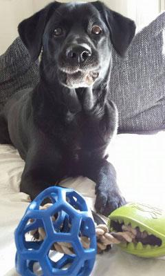Aus alt mach neu!Barco ist begeistert von seinem Gitterball-Monster Mouth-Spieltau  14.04.2016