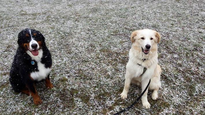 Feli (links) und Teo (rechts) 15.03.2016