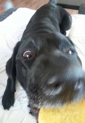"Barco ""Schmeckt auch lecker...Der Hundemuffin!"" 13.03.15"