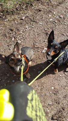 Mausi und Zeus warten auf ein Leckerli 06.04.2016