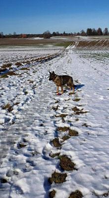 Noch den letzten Schnee ausnutzen, bevor er weg schmilzt... Baby 26.01.2016