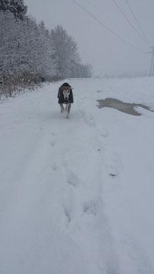 Schon wieder Schnee...Siggi ist seeeehr begeistert... 25.02.2016