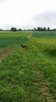 Diesen Weg lief ich das 1. mal mit Jacko&Baby...Heute nur noch mit Baby :( Und mein Herz war schwer :( 10.06.15