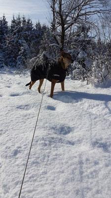 Der durch den Schnee stapft - Shibo 18.01.2016