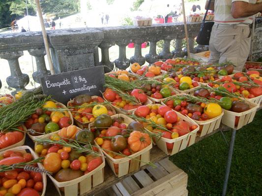 Belle collection de tomates anciennes
