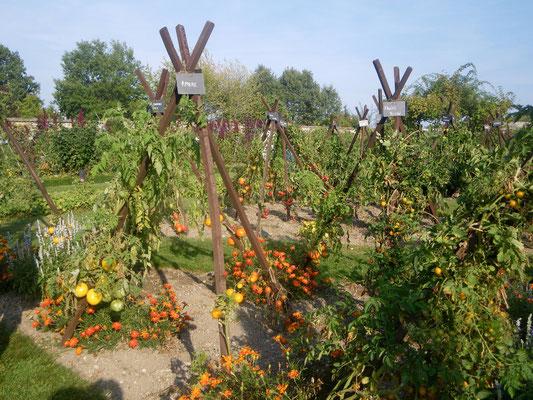 Conservatoire de la tomate à La Bourdaisière
