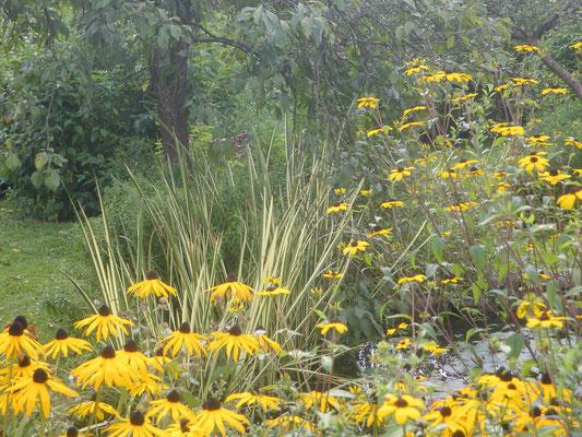 Jardin du peintre  André VAN BEEK  à Saint Paul