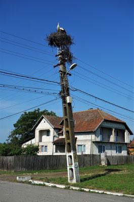 Über jedem Dorf thront mindestens ein Storch.