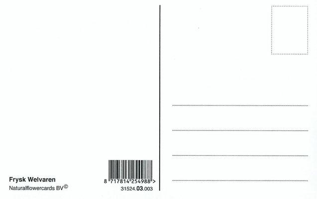 Ansichtkaart Gevangenis Leeuwarden A0145-b