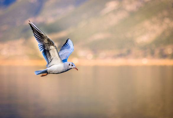 Der Vogel verlässt sich nicht auf den Ast, auf dem er sitzt. Er verlässt sich auf seine Flügel, die ihn tragen.