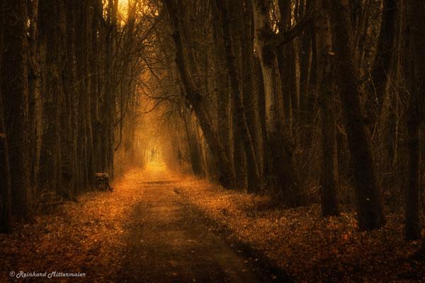 Reinhard Mittermaier - Deep Forest