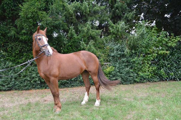 Bild 2: Pferd Titelseite