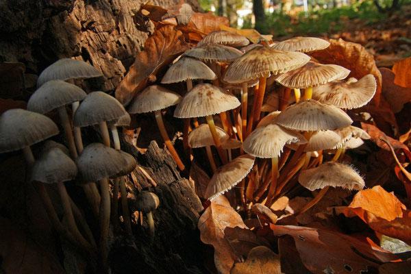 Goldener Herbst - Elke Riesmeier