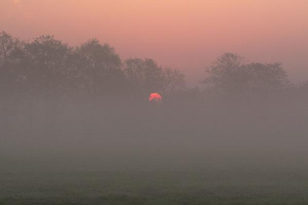 Nebel Barkenkuhlen - Silke Lorenz