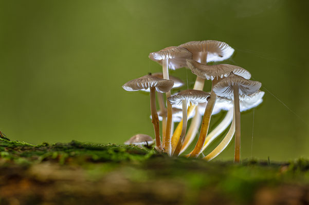 Pilz 2 - Michael Greilich