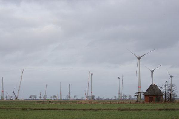 Wind Goldrausch. Ingo Heymer