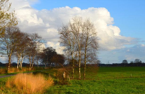 15 Ipweger Moor, Hermann Niehuis-Schwiertz