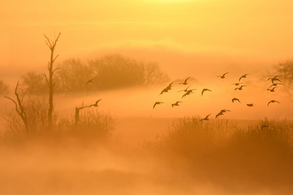Morgenröte am Tief - Michael Greilich